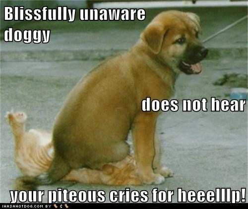 Friday Funny Fantastic Pets